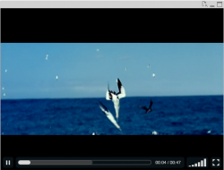 VideoPlayer QlikView Extension